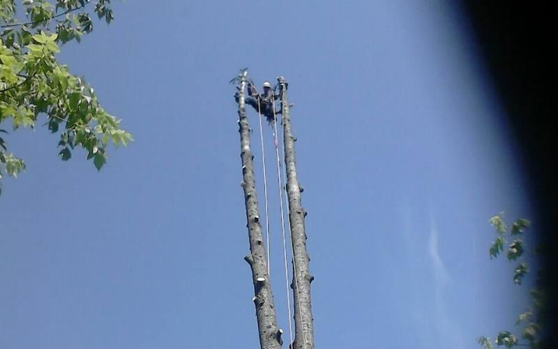 abbattimento albero tree climbing Bologna
