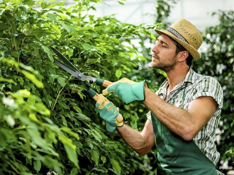 Lavori di giardinaggio