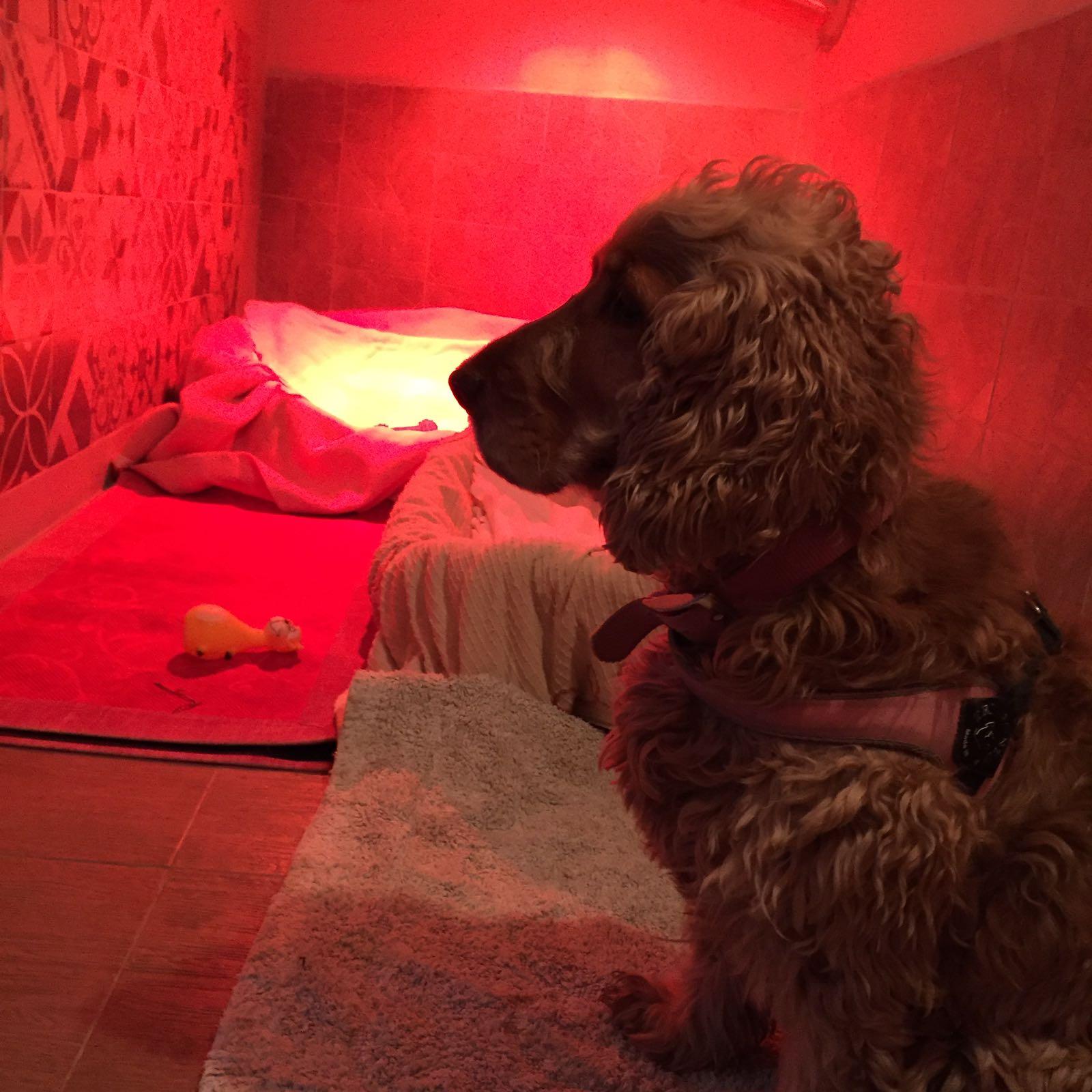 cane nella pensione per cani