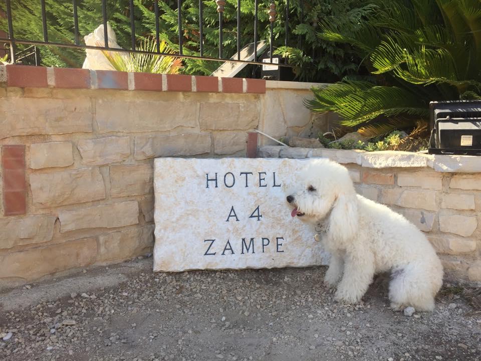 Hotel A  Zampe Trani