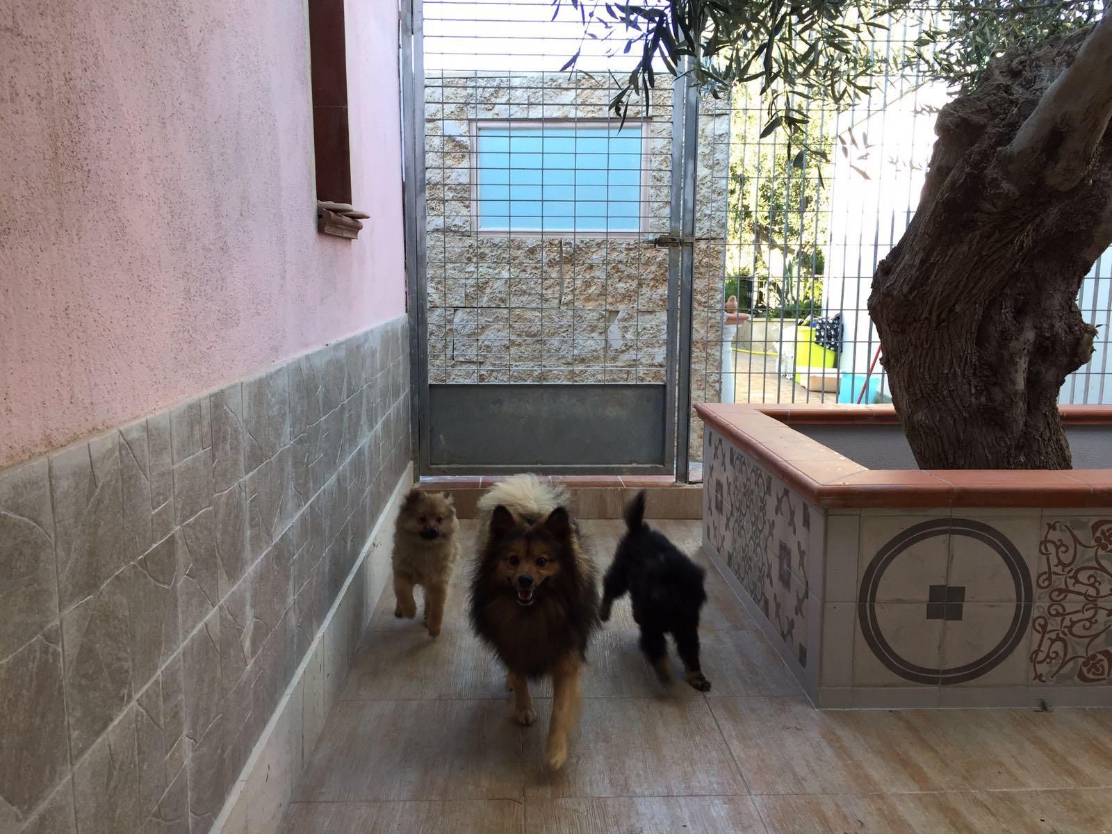 tre cani in un box