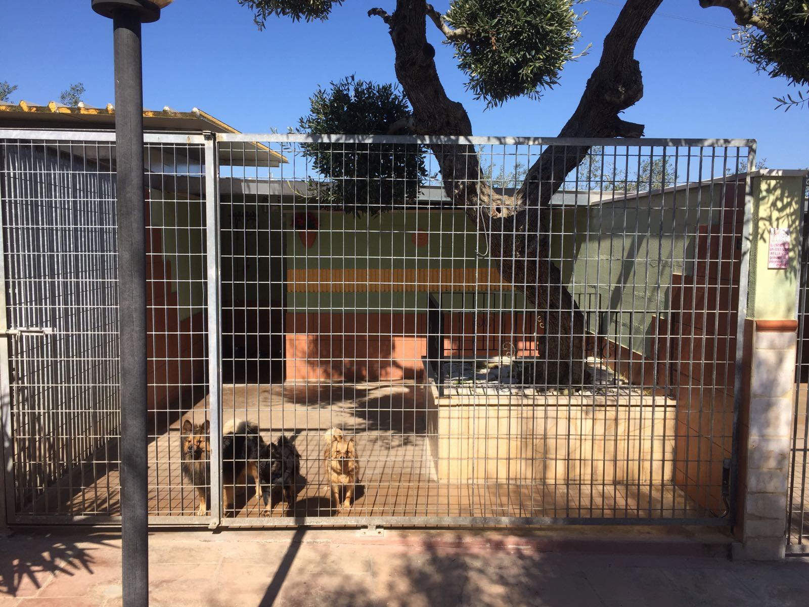 tre cani in un box all'aperto