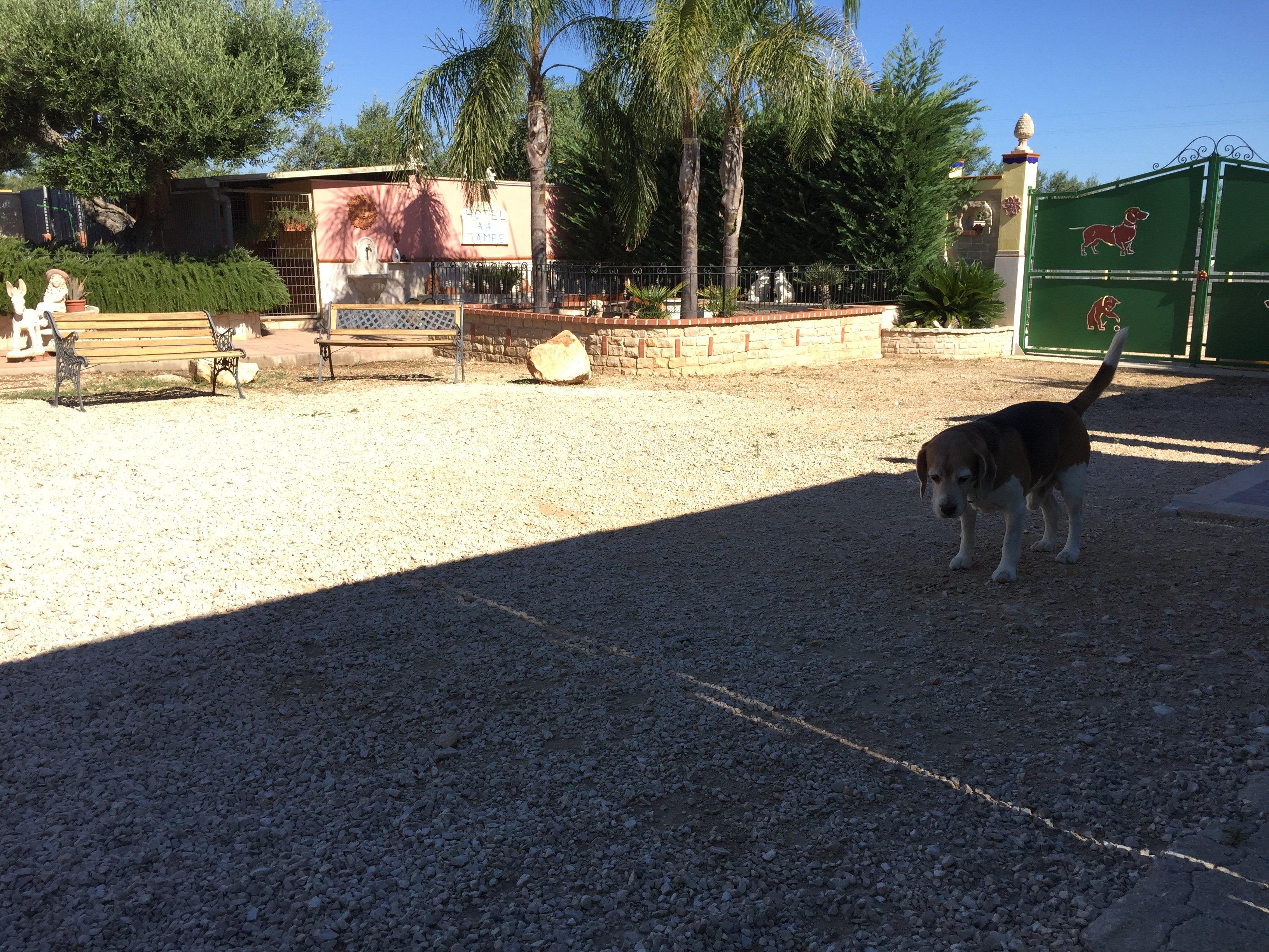 cane che gioca all'aperto