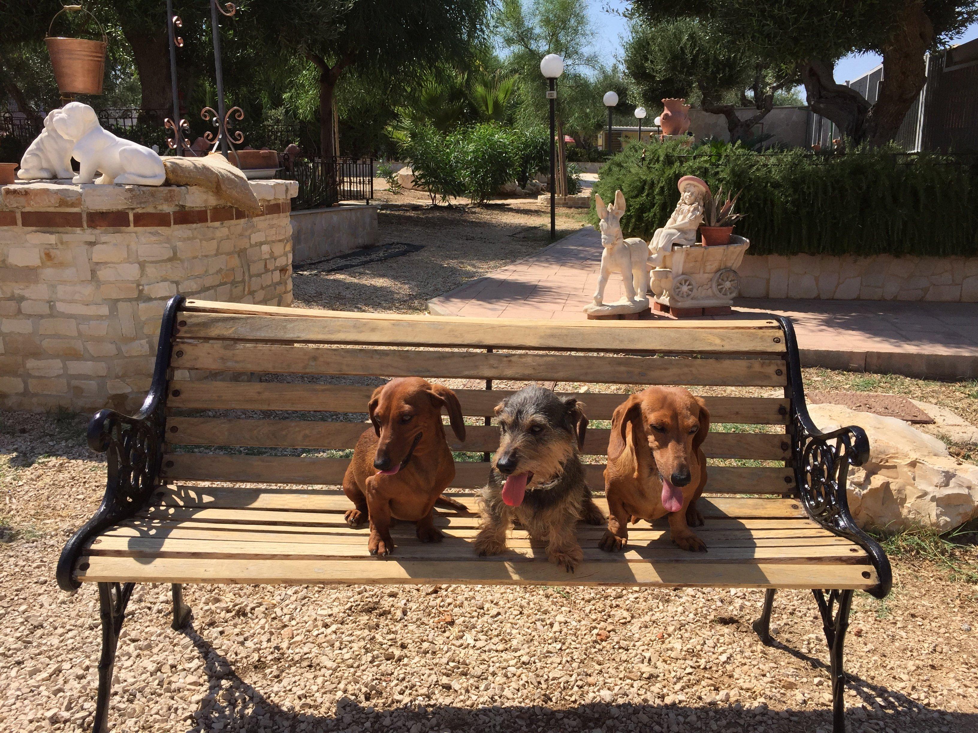 tre cani su una panchina