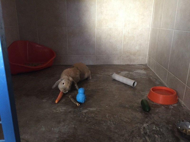 un coniglio che mangia la carota, una ciotola e una lettiera