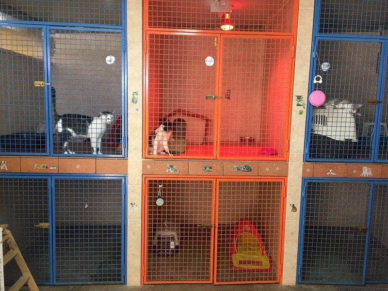 dei gatti dentro a delle gabbie colorate