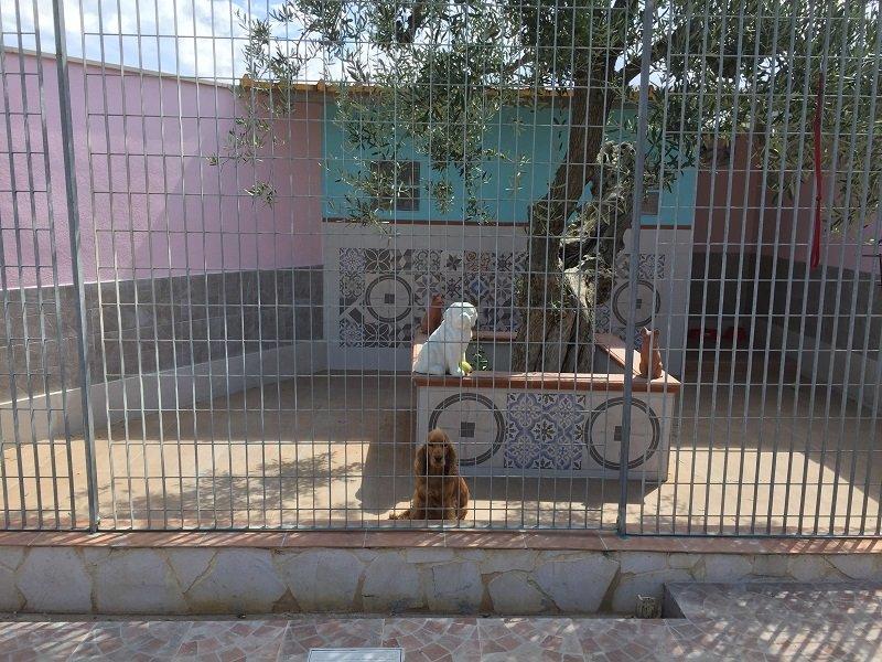 un cane cocker spaniel di color marrone dietro a una recinzione