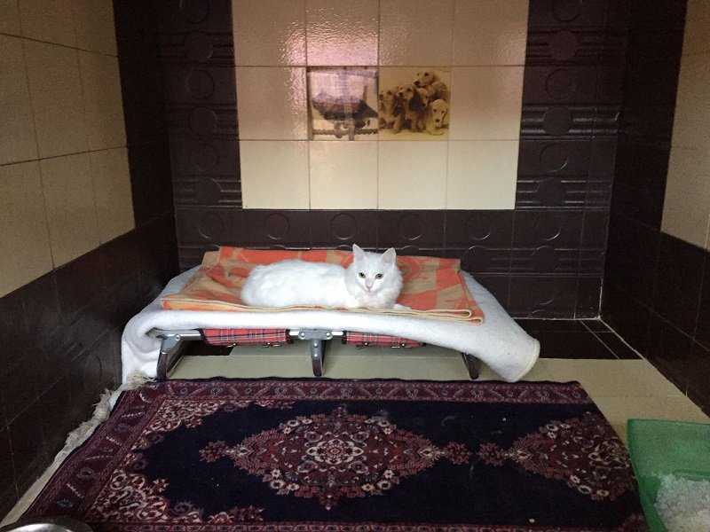 un gatto bianco seduto su una branda rialzata