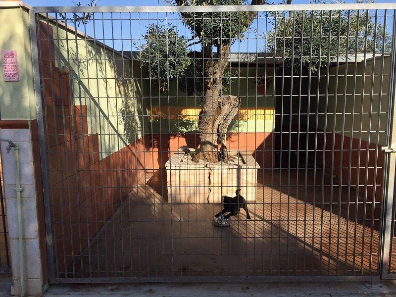 un cagnolino nero che gioca dietro a una recinzione