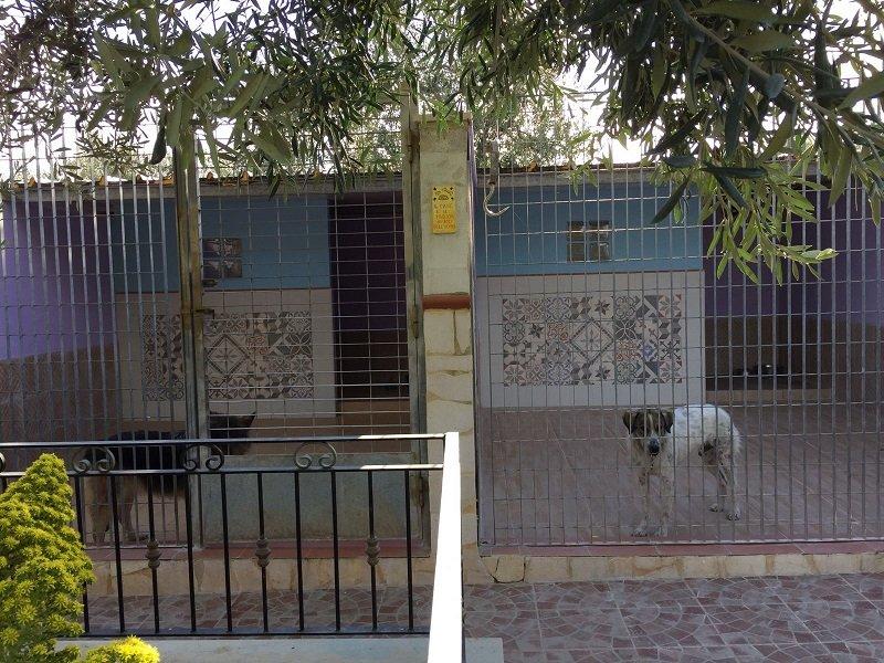 un cane bianco e marrone dietro a una recinzione