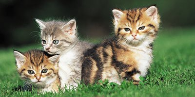 cats breeding