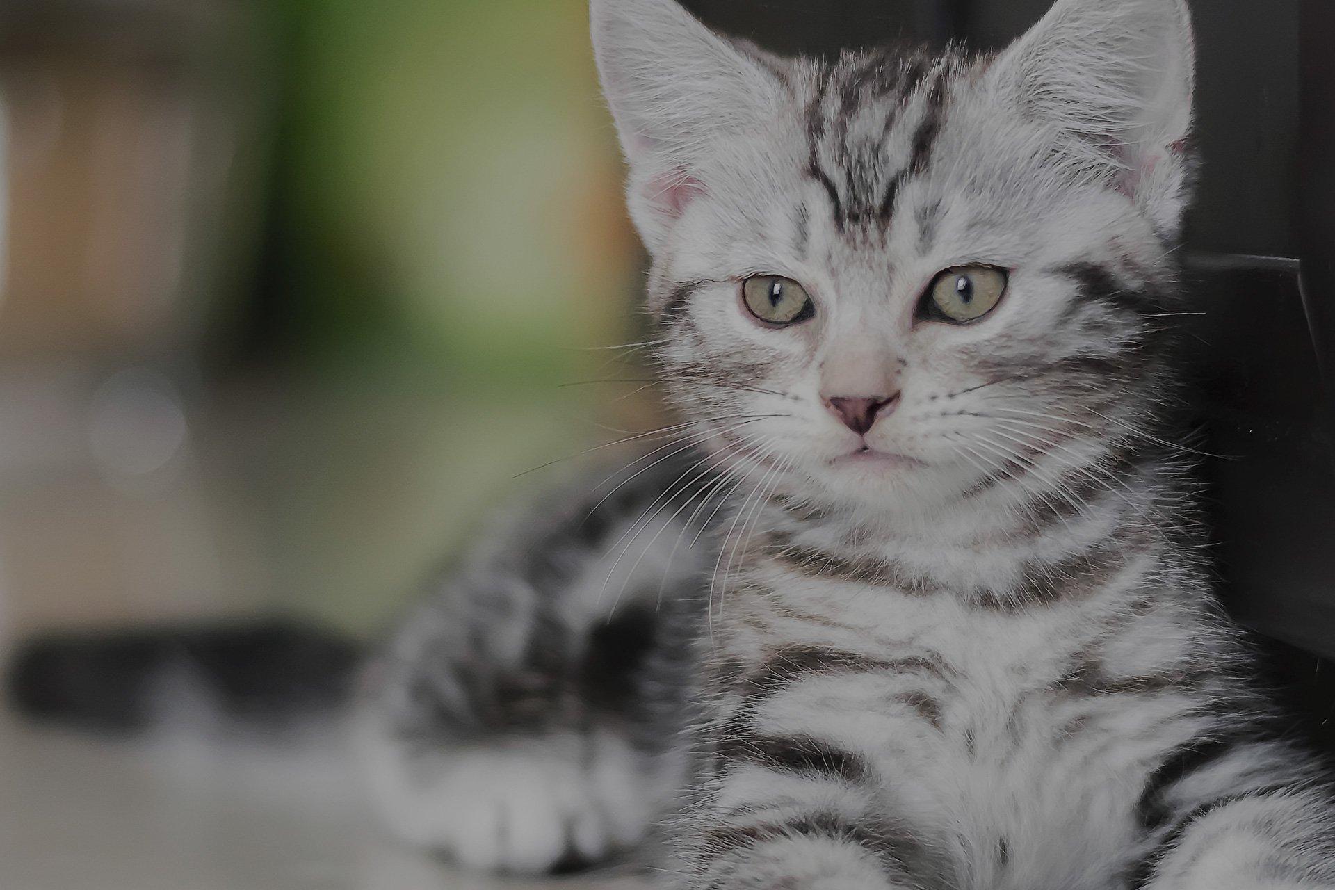 a cat sitting