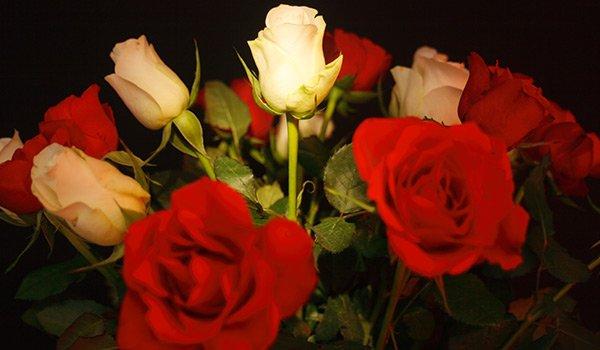 mazzo di rose rosse e bianche viste da vicino