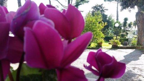 primo piano fiori del giardino della casa di riposo