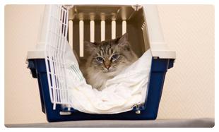 cat in a carry case