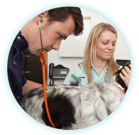 vet and nurse carrying out a dog check up