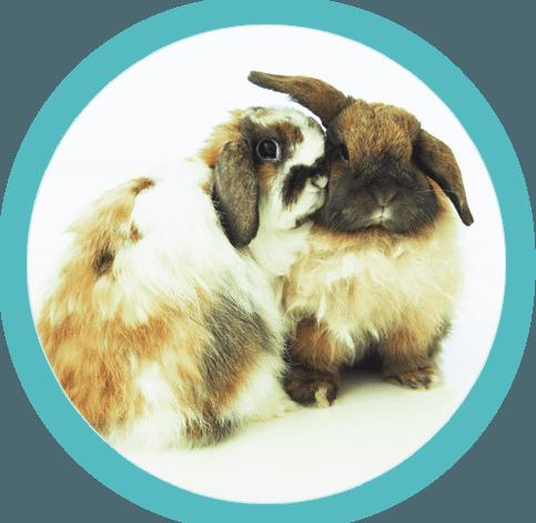 two bunny rabbits cuddling