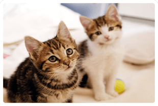 two kittens looking up