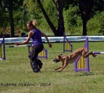 Addetta del centro cinofilo addestra un cane in un percorso ad ostacoli