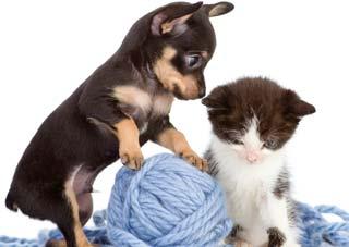 Pet Boarding in San Jose, CA - Saratoga Veterinary Hospital