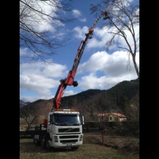 Noleggio piattaforme aeree per potatura alberi