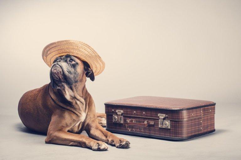 offerta pensione cani roma