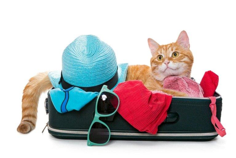 pensione per gatti roma