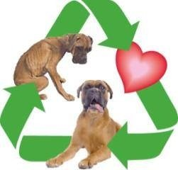 Recycled Doggies