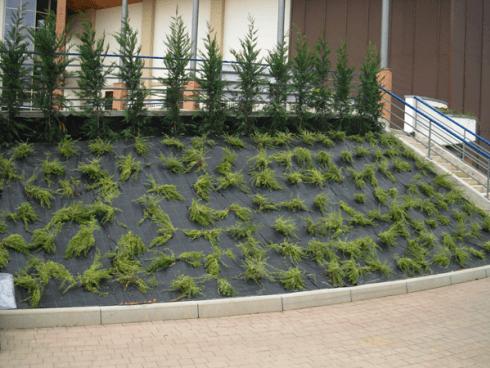 realizzazione aree verdi