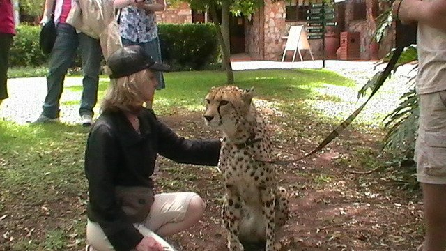 Dr Flint with cheetah