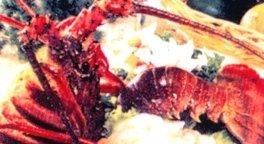 pesce cotto alla griglia o fritto di ottima qualità