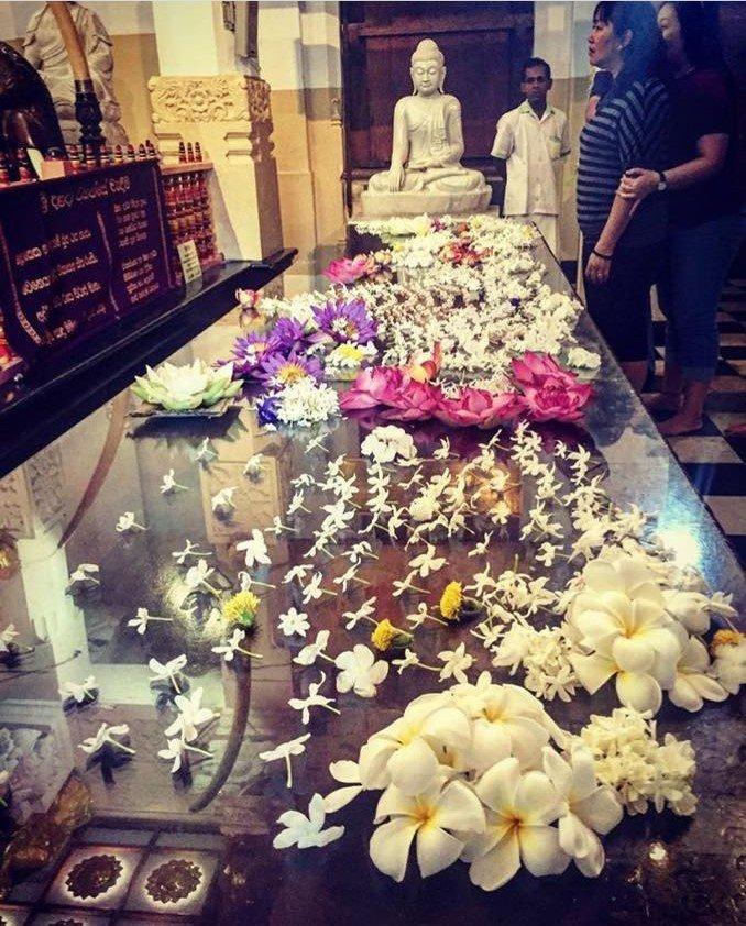 fiori dall'India