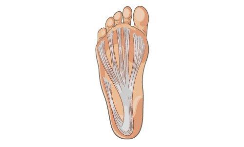 pianta di un piede
