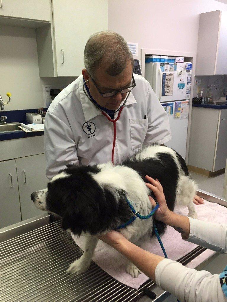 A vet kneeling next to a dog