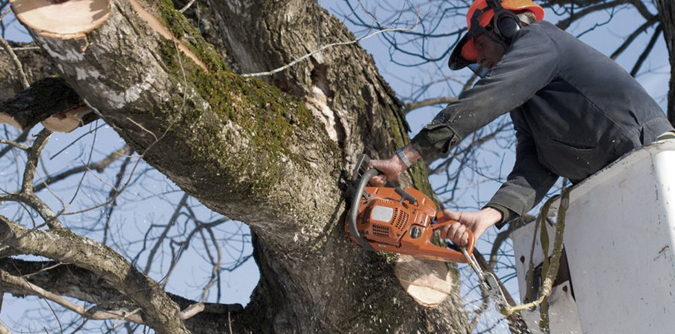 dangerous tree removals