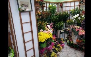vendita piante, vendita fiori, vendita piante e fiori, Rieti