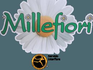 Millefiori, Piante e fiori Millefiori, Piante e fiori, Rieti, Servizio Interflora