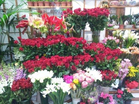 fiori, piante, fiori e piante, fioristi, Rieti