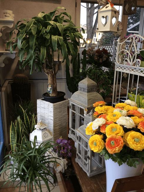 Amate i fiori a foglia larga? Volete addobbare il vostro giardino? Sogni Fioriti vi aspetta.