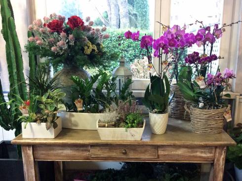 Presso il fioraio potrete acquistare varie piante in vaso. Recatevi per scoprirle tutte.