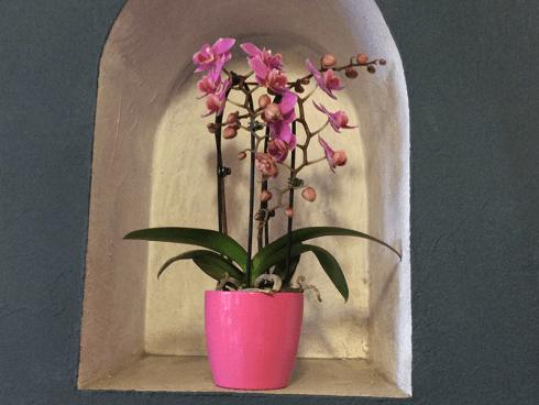 Da Sogni Fioriti troverete diverse piante ideali da regalare.