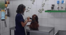 toeletta, toelettatura animali, lavaggio cani