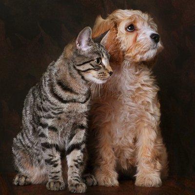 aggressive cat training