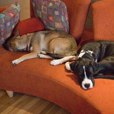 2 dogs lying