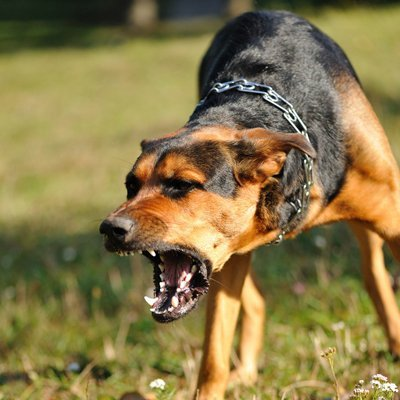 dog being aggressive