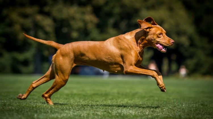 What S The Purpose Of Agility Training For Dogs