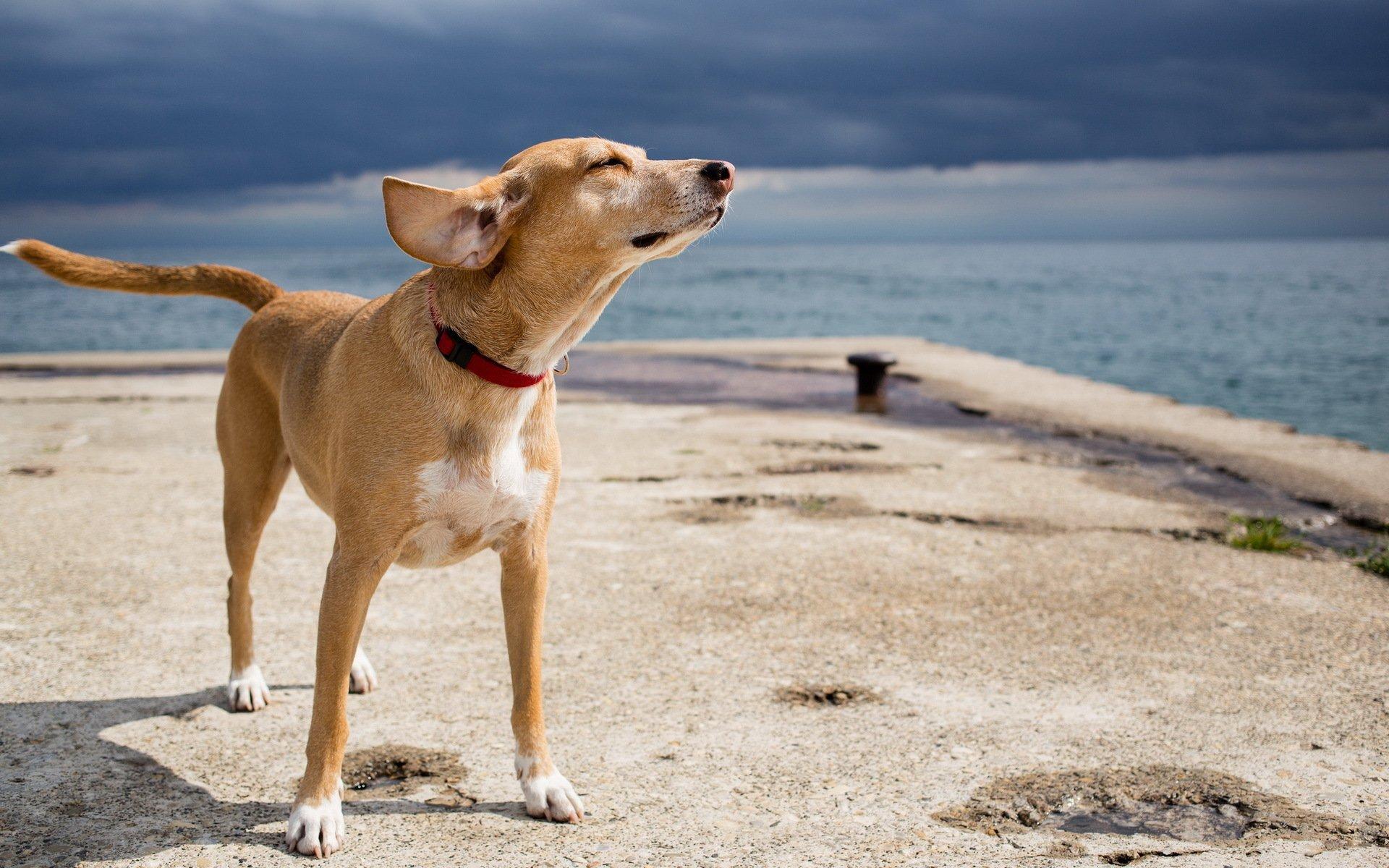 Is Scratby Beach Dog Friendly