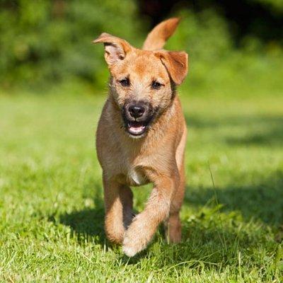 a happy dog running