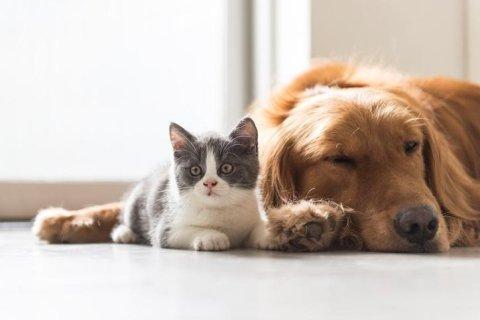 Pensione gatti e cani