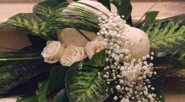 piante e fiori, composizioni floreali